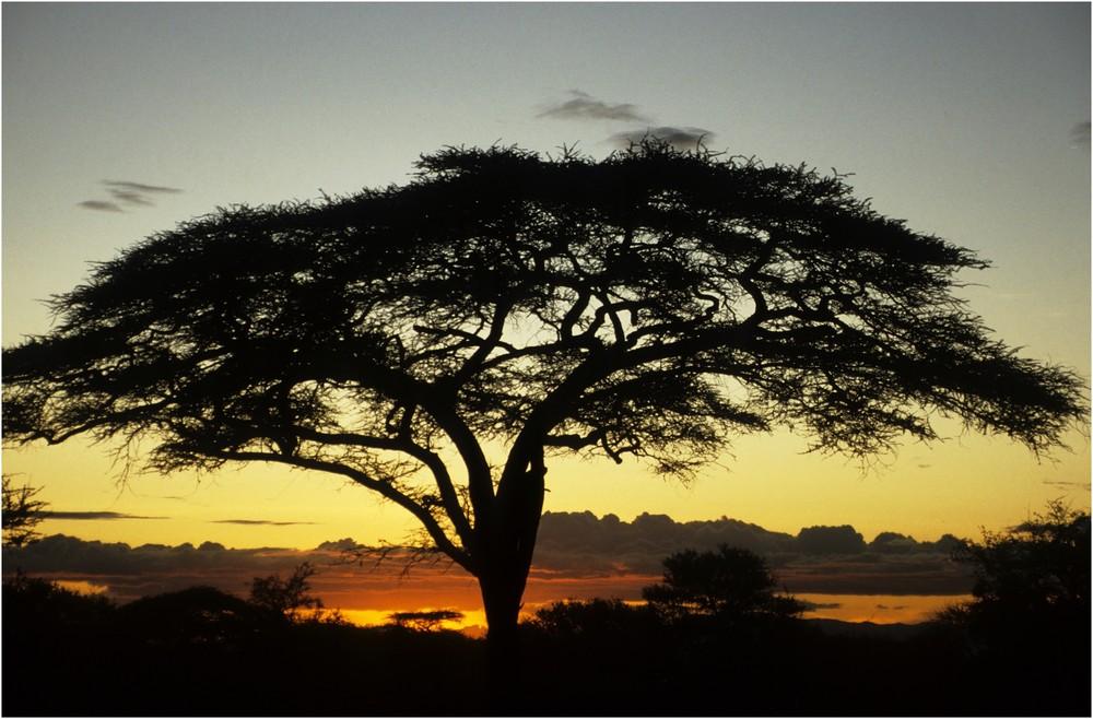 Kenya (8)