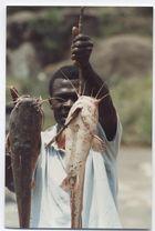 kenya ,le poisson chat