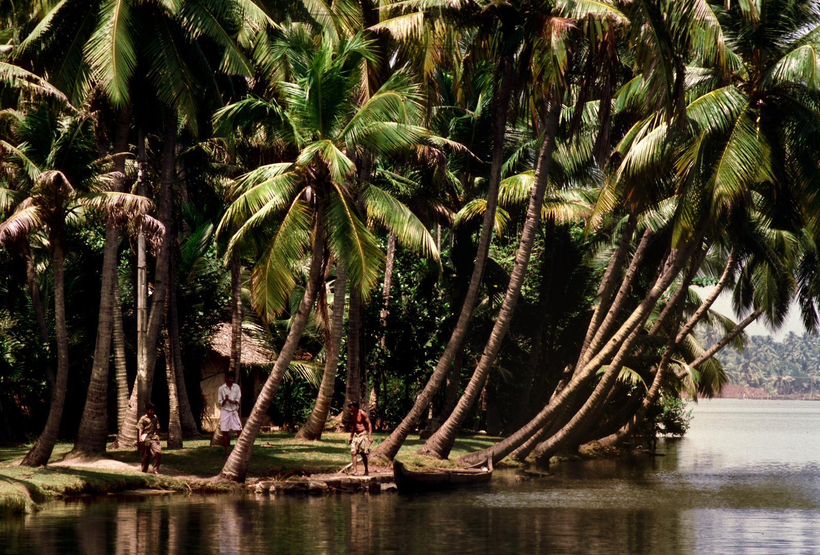 "Kerala das ""Kokosland"""