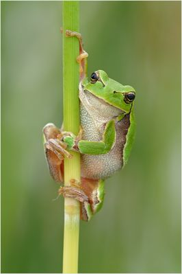~ Kermit ~