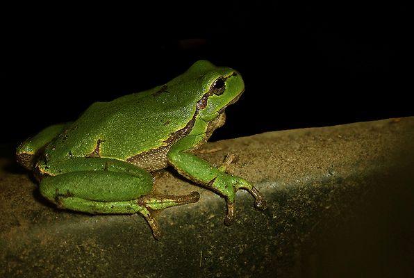 ...Kermit...;-)