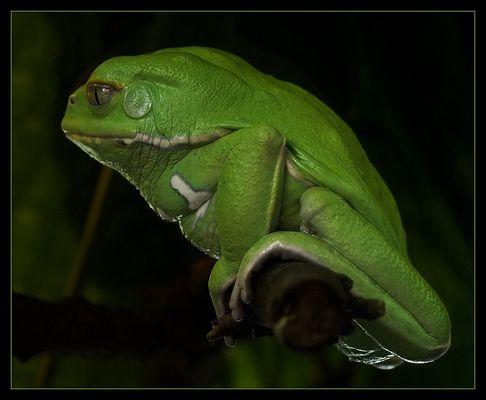 Kermit III