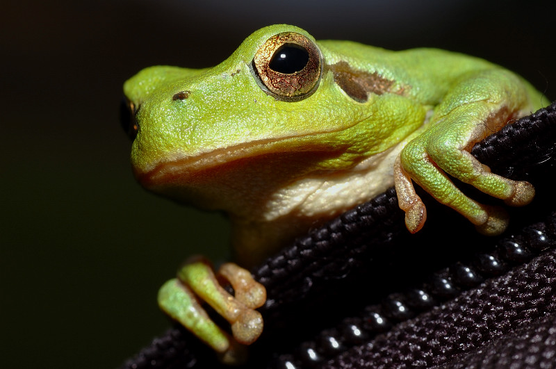 Kermit, the Frog