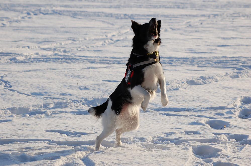 Kessi und Schnee