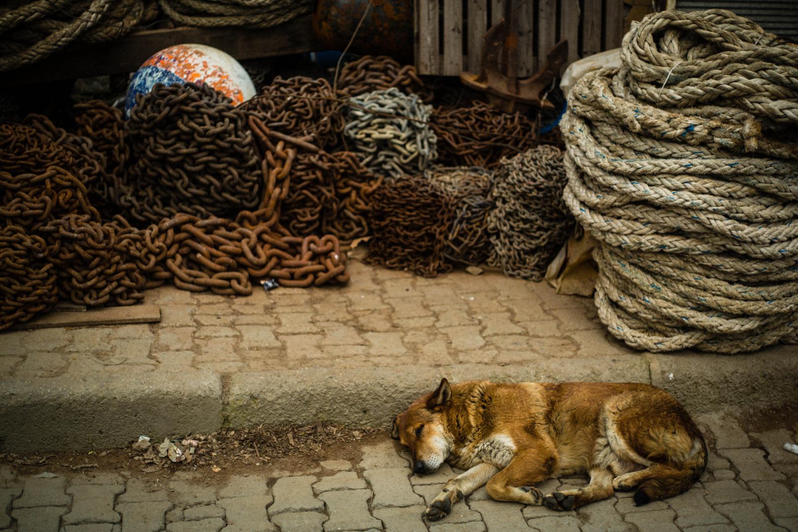 Kettenhund
