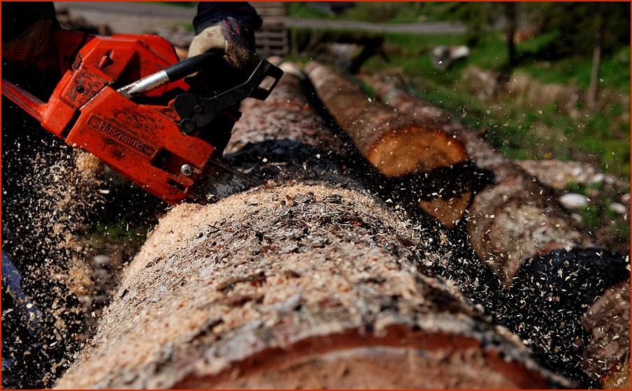 Kettensägen Holzmassaker I