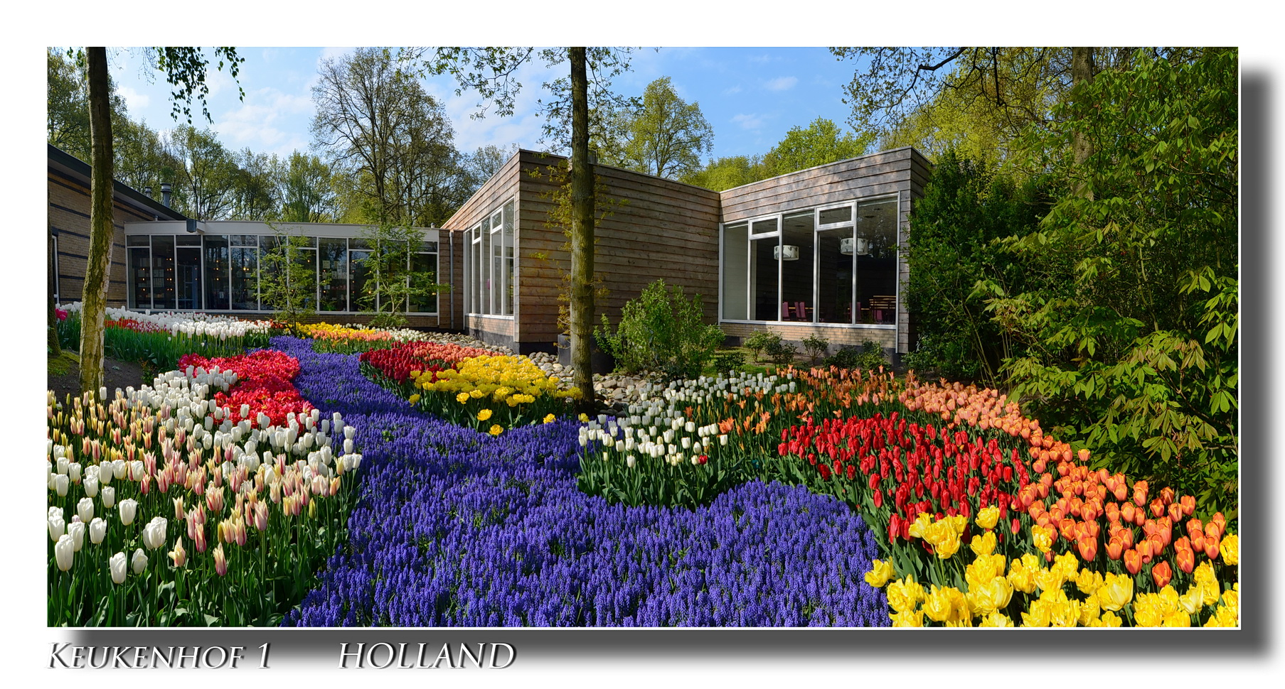 Keukenhof 1 HOLLAND