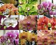 Keukenhof Lisse Niederlande (Orchideen)(23.03.2012) by Walter Kleinert