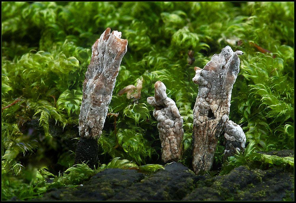 Keulen - Pilze...von Pilzen befallen