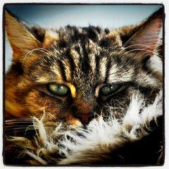 Kia eine der vielen Katzen, die unsere Familie besitzt