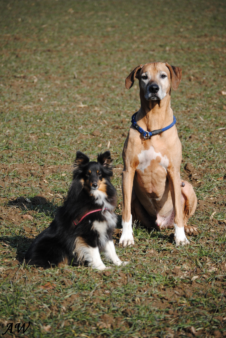 Kiambo und Lilly
