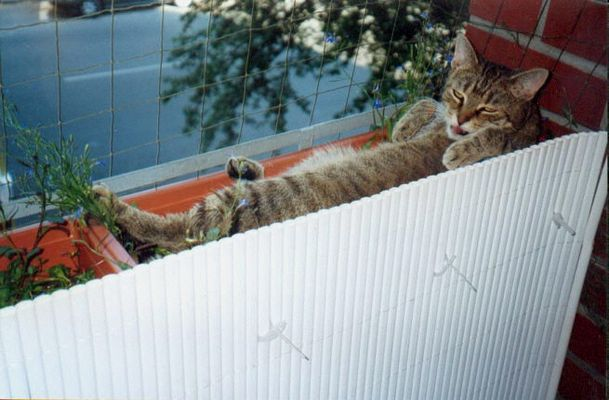 Kiffer-Katze