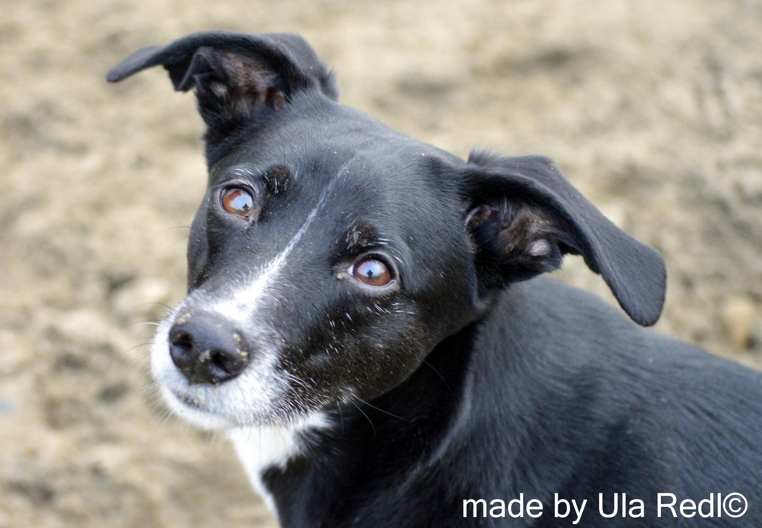 Kiki , der Hund einer Freundin