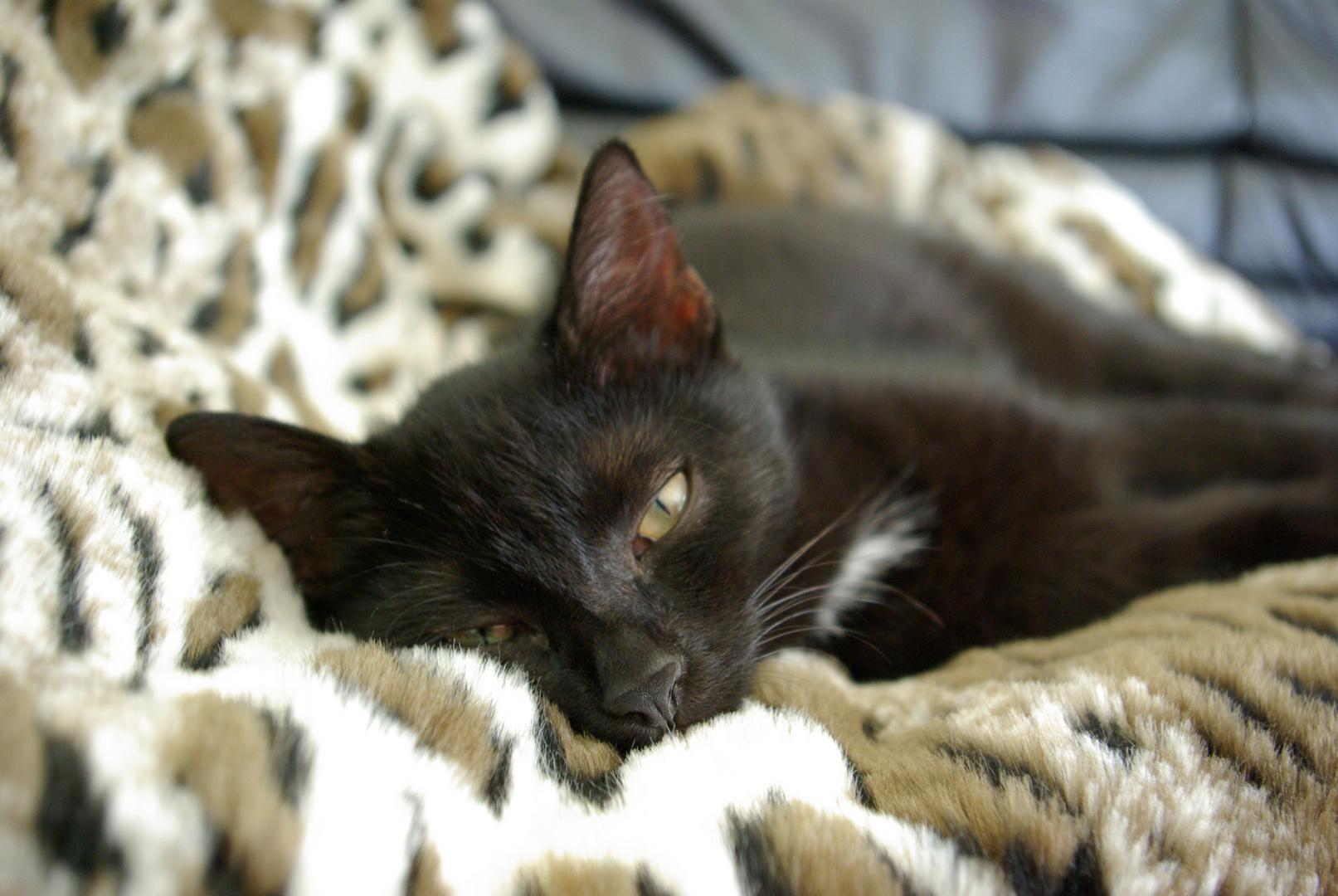 Kiki the cat