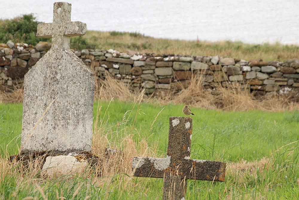 Kilcummin Graveyard...and a little bird