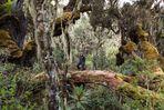 Kilembe Trail - Tag 3
