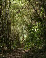 Kilembe Trail - Tag 5