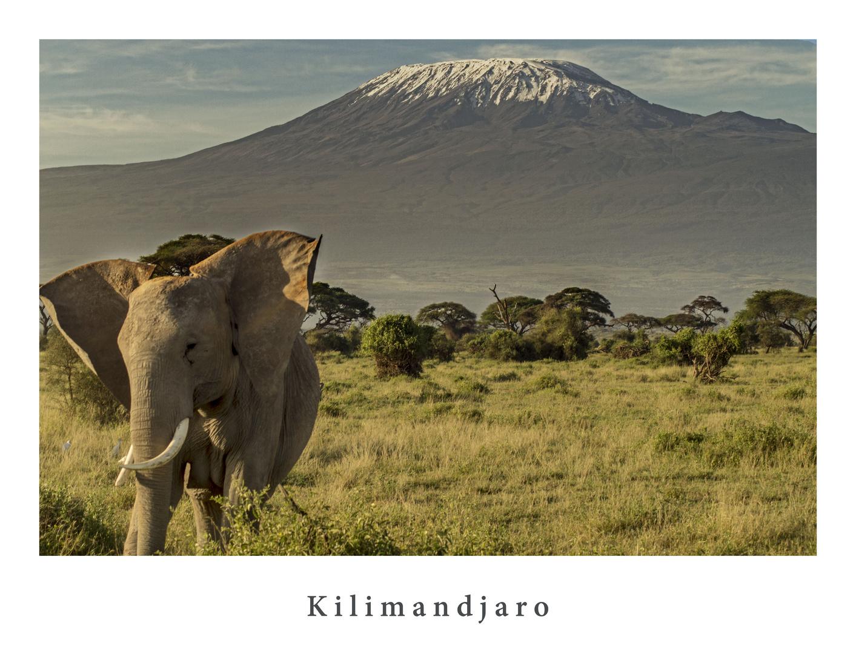 Kilimandscharo mit Elefant