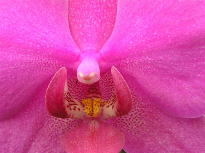 Killerorchideen greifen an!