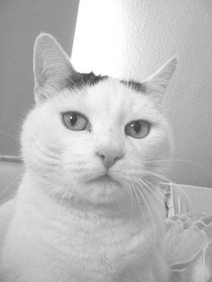 Kim unsere Katze