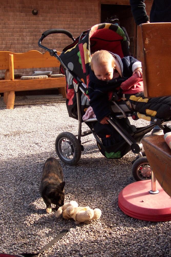 Kind betrachtet Katze