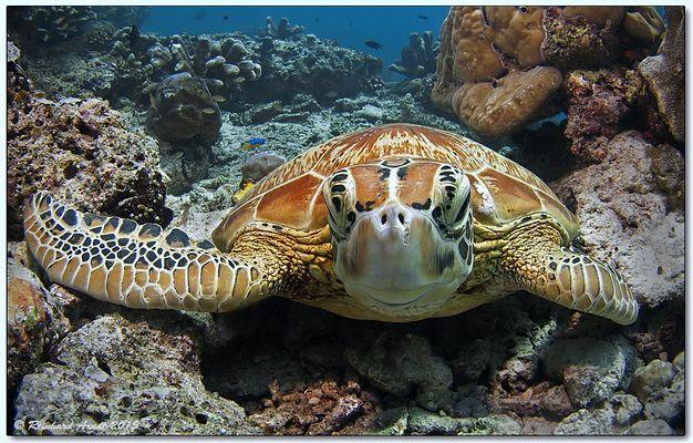 kind turtle