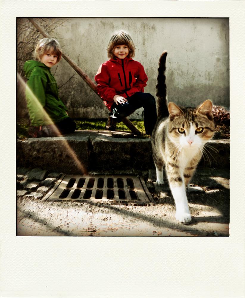 Kinder Katze Gully .