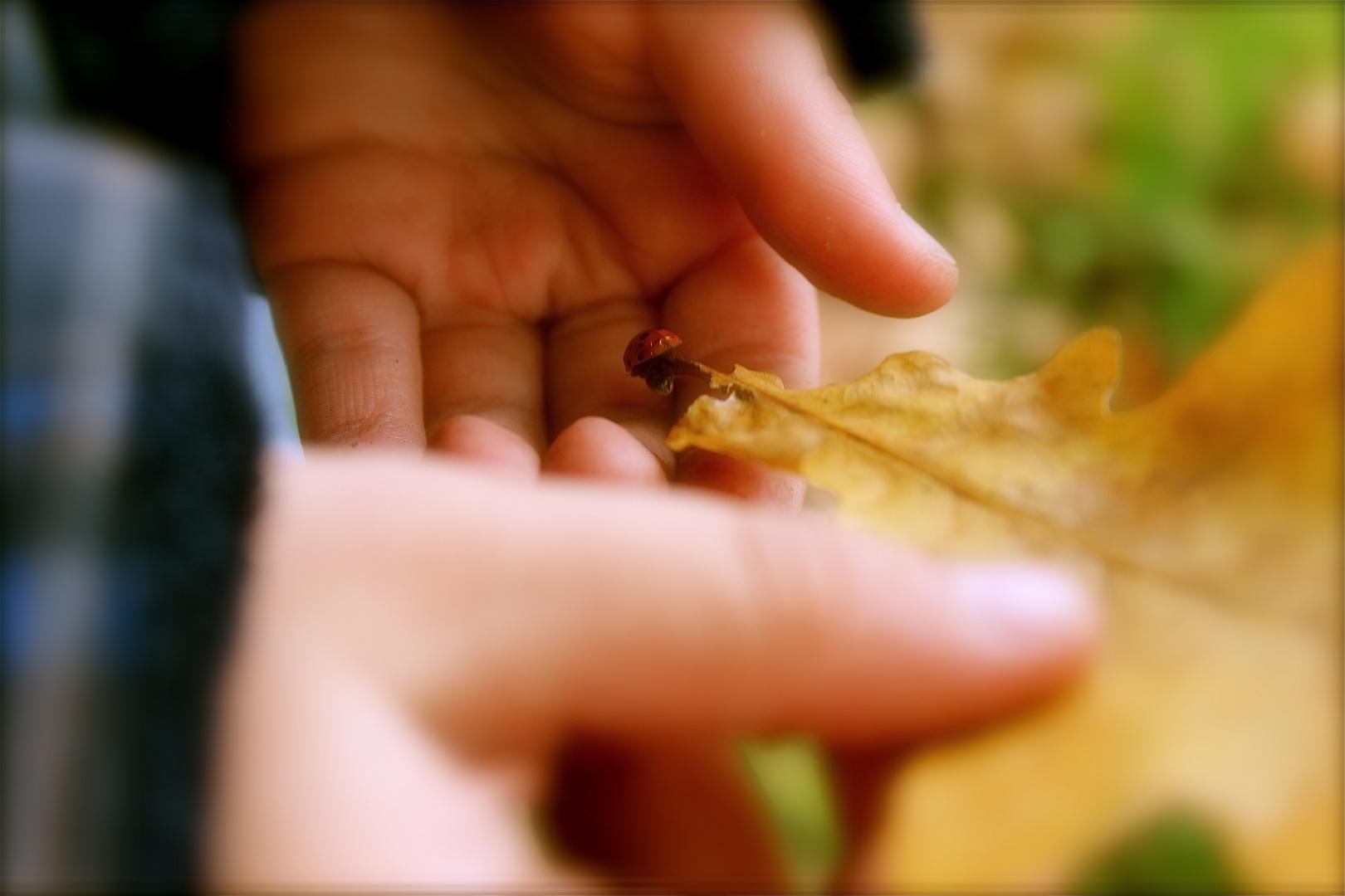 Kinderhände Entdecken