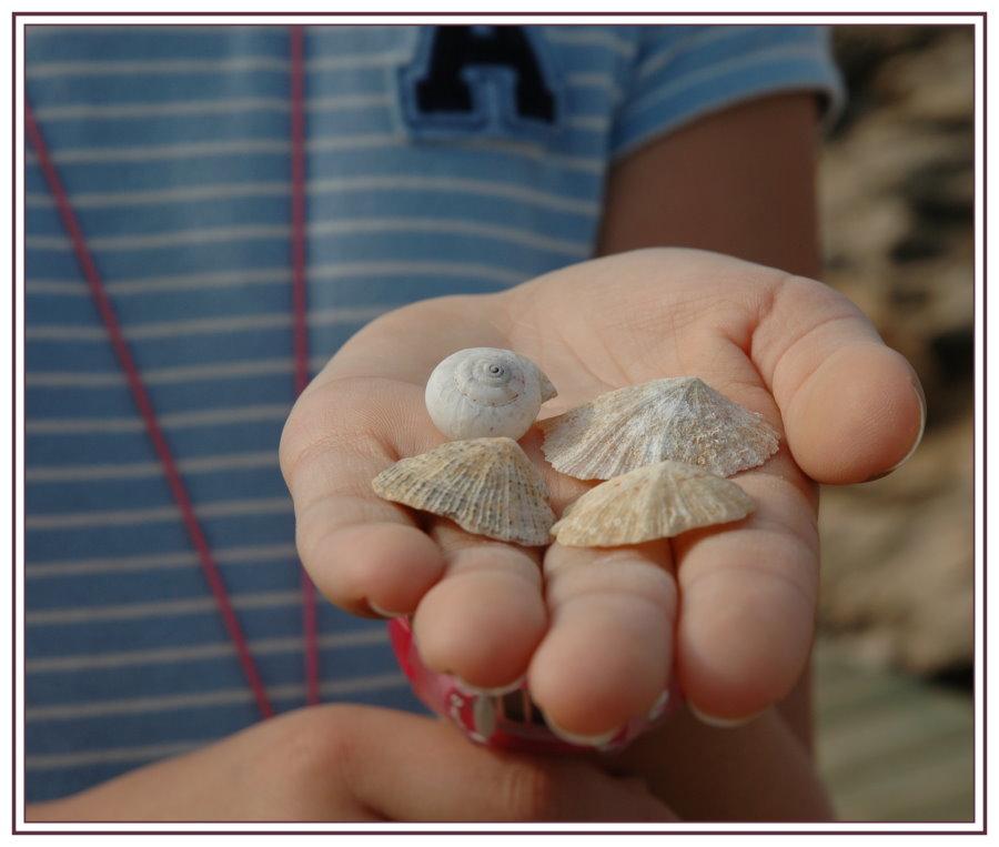 Kinderhand mit Muscheln