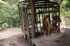 Kindersicherung im Dschungel