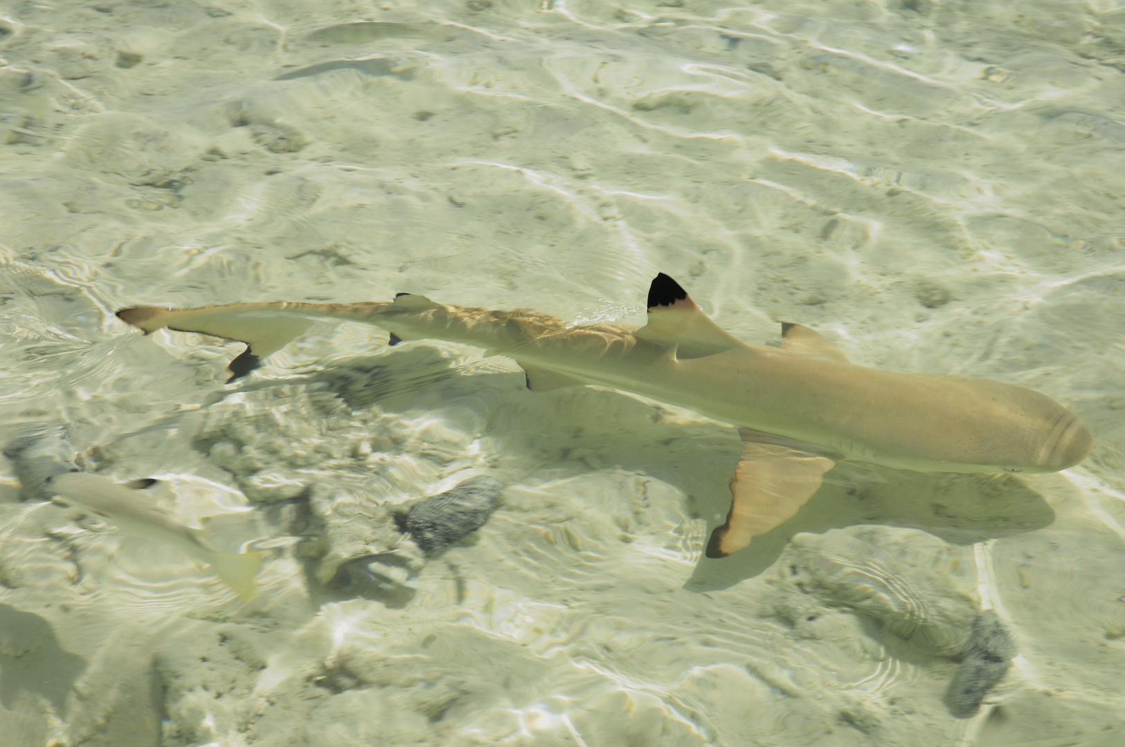 Kinderstube der Haie