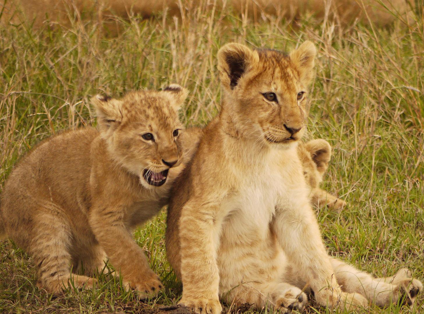 Kinderstube Massai Mara - Was für'n Spaß