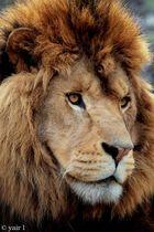 KING!!!