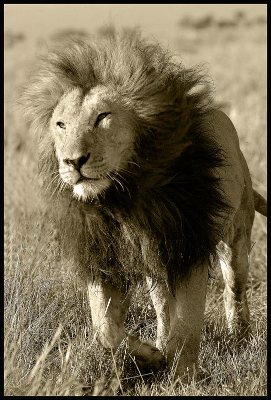 >King
