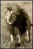>King<