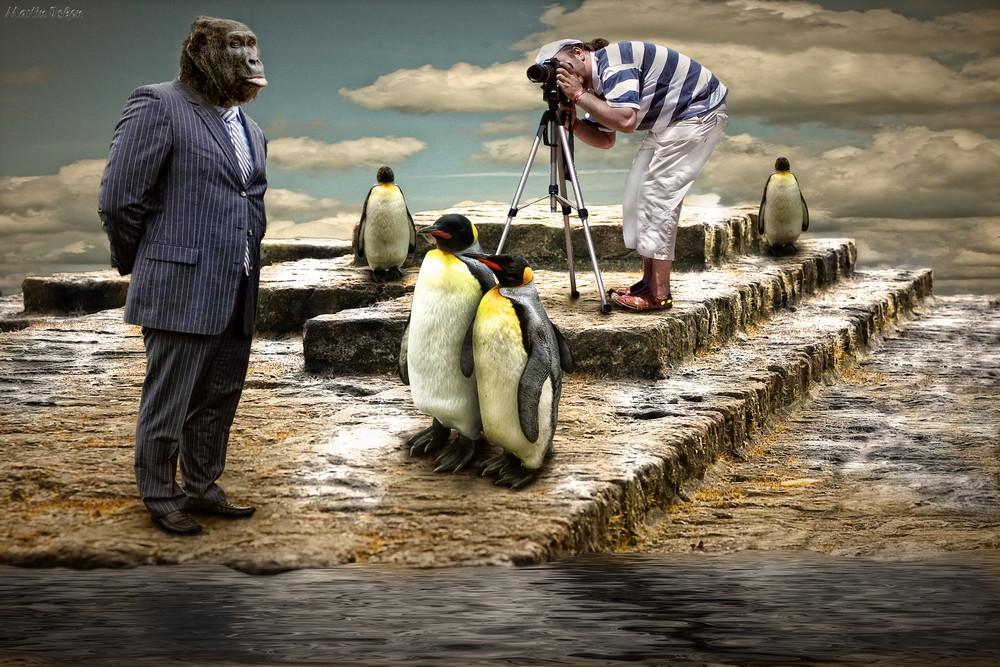 King-Kongs Urlaub auf den Falkland-Inseln