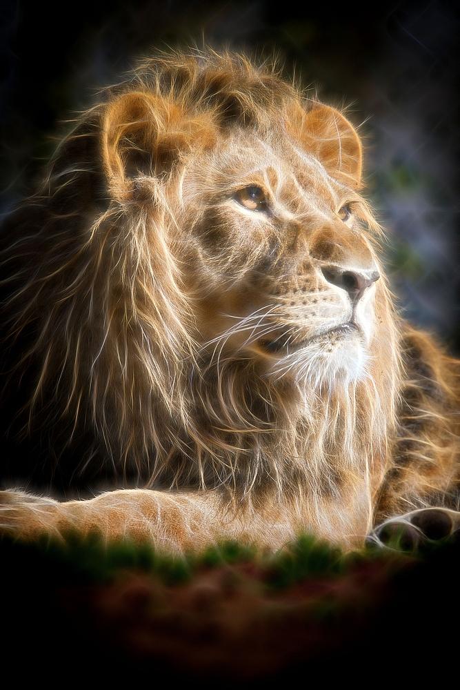 king leo