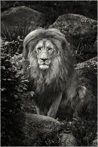 King Leo II