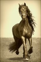 King of Horses....