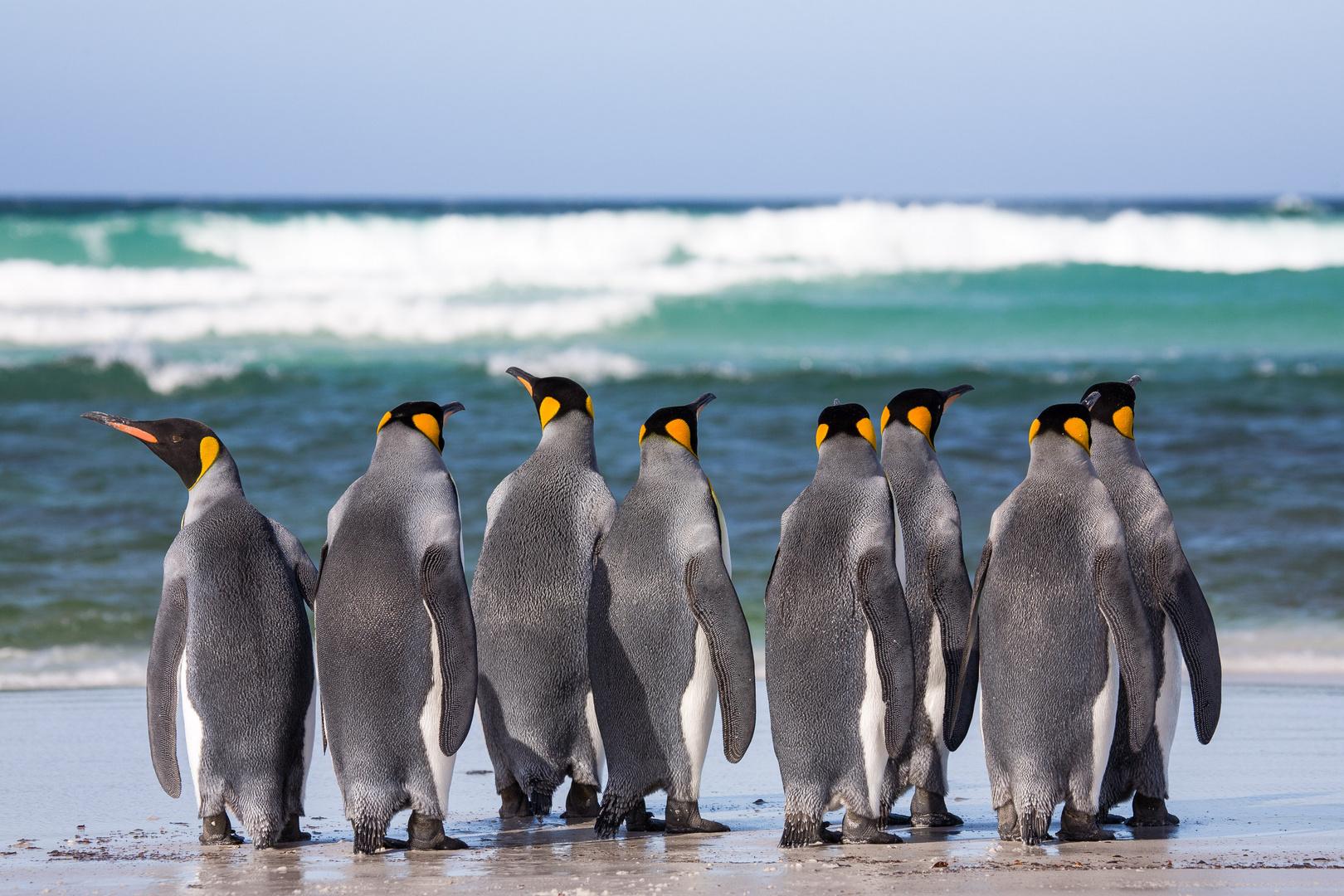 Kings on the beach