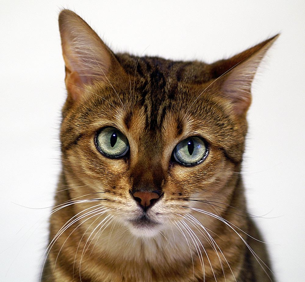 kira oder wie man s eine katze fotografiert foto bild natur katzen tiere bilder auf. Black Bedroom Furniture Sets. Home Design Ideas