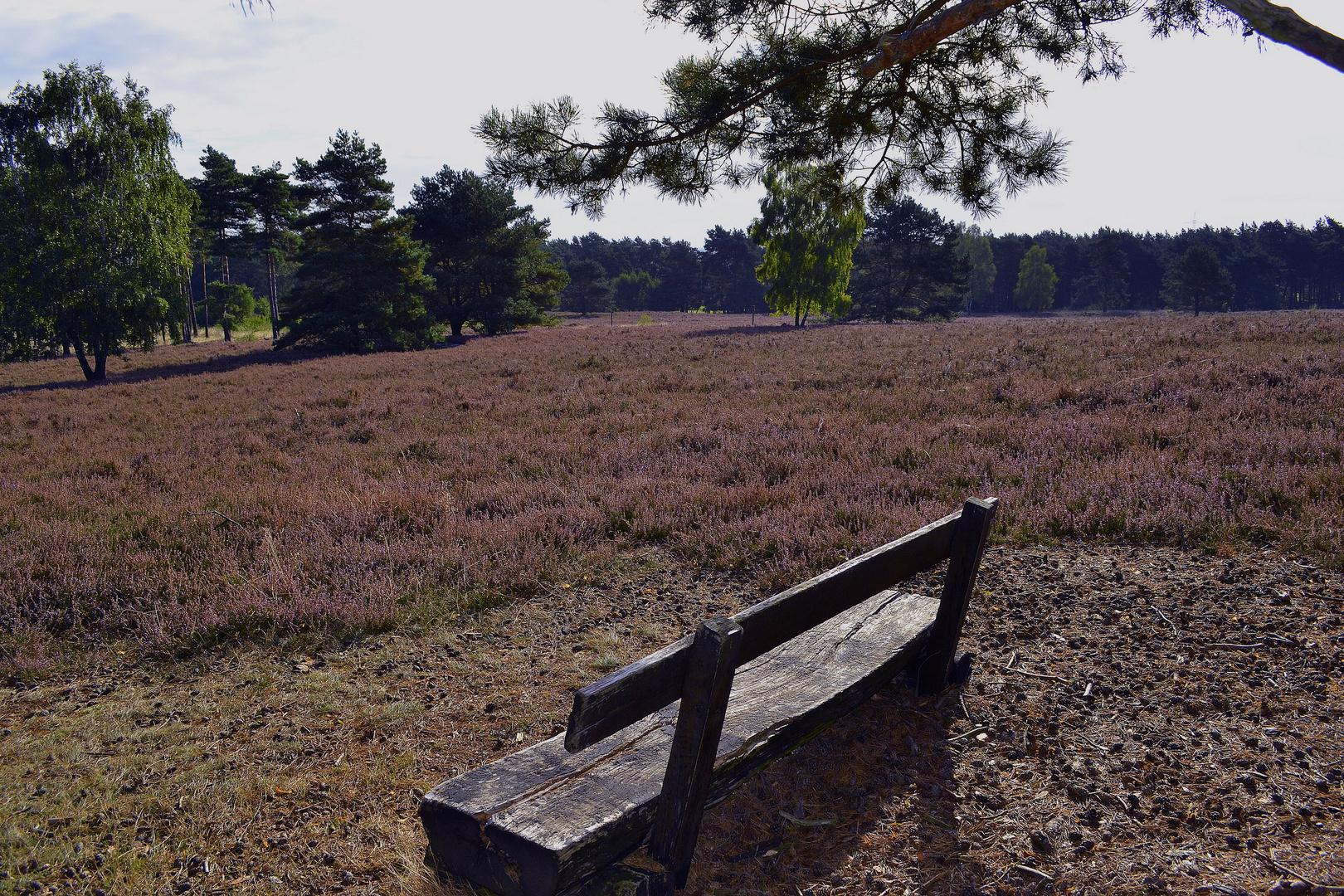Kirchdorfer Heide