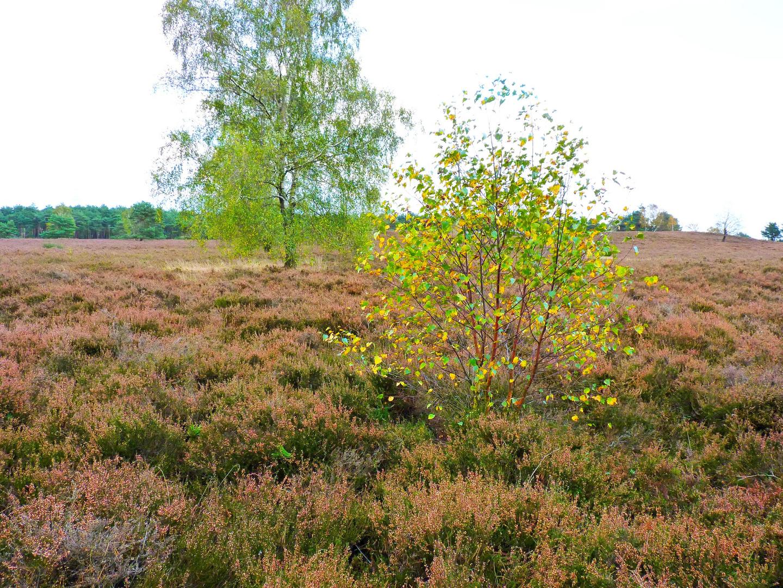 Kirchdorfer Heide im Herbst