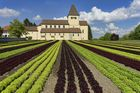 Kirche im Salat