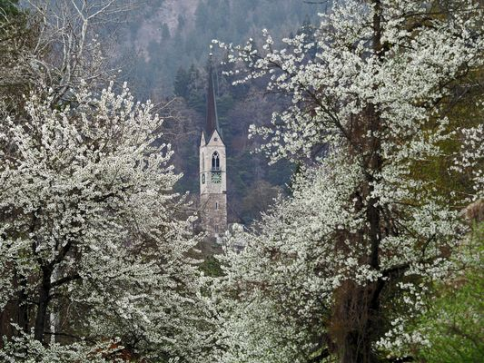 Kirchturm im Blütenmeer