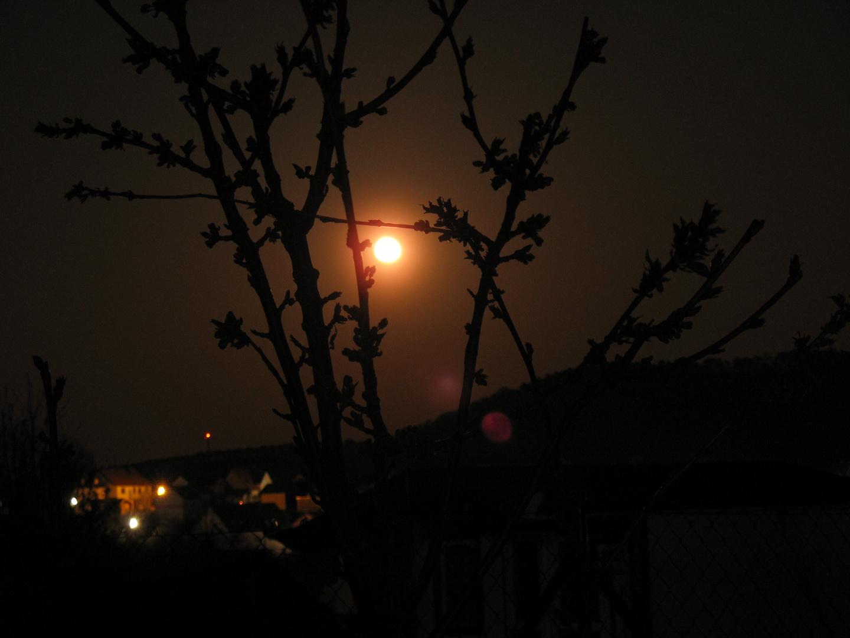 Kirschbaum im Mond