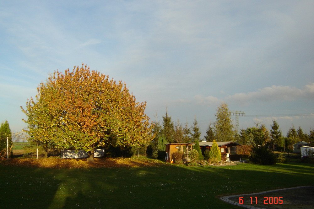 Kirschbaum und Garten im Herbst