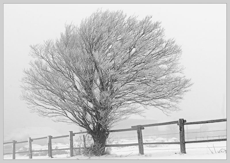 Kirschbaum zur Winterzeit