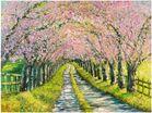 Kirschbaumallee im Frühling