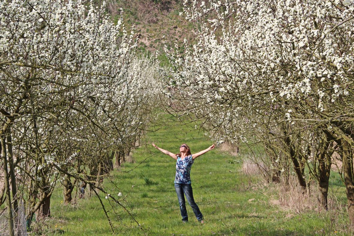 Kirschblüte ... ENDLICH :-)